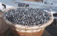 Superfood: Acai-Beere - Beauty Lounge